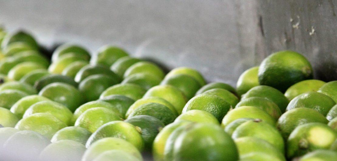 produzione succo di lime
